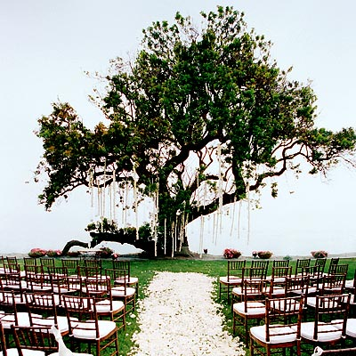 Outdoor Ceremony Backdrops